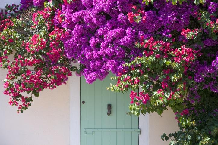 Les bienfaits des fleurs sur les personnes âgées